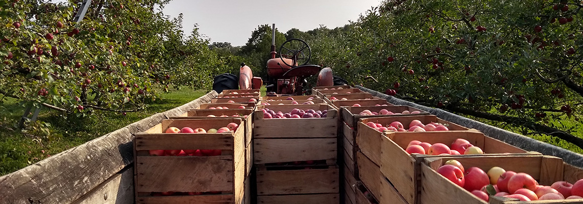 Apple Boxes in a Wagon